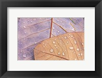 Framed Waterdrops on Magnolia Journal