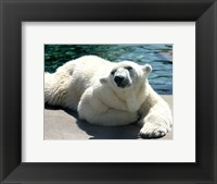 Framed Polar Bear on the floor