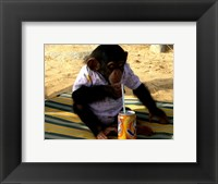 Framed Chimp - Time for a drink