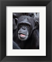 Framed Funny face monkey