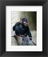 Framed Orangutan - Burlap Hat