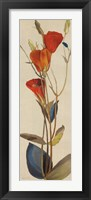 Red Grandiflorum II Framed Print