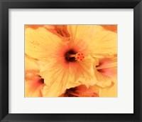 Framed Hibiscus Cluster I