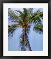 Palm on Blue Framed Print