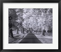 Kentucky Horse Park Lane Framed Print