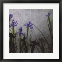 Blue Irises II Framed Print