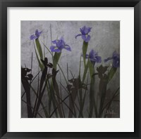 Blue Irises I Framed Print