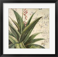 Framed Aloe II