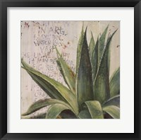 Framed Aloe I