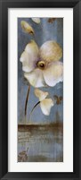 Late Summer Poppies Framed Print