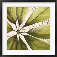 Fresh Leaves II Framed Print