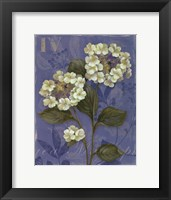 Lace Hydrangea - mini Framed Print