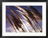 Pampas In The Wind Framed Print