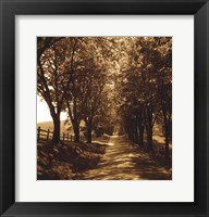 Ash Lawn I Framed Print