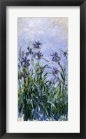 Framed Purple Irises, 1914-17