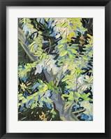 Framed Acacia in Flowe