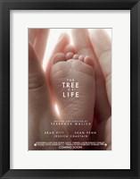 Framed Tree of Life