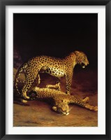 Framed Two Leopards Playing in the Exeter Change Menagerie