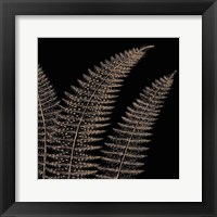 Fern II (on black) Framed Print