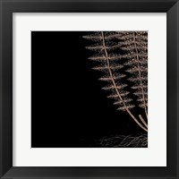 Fern III (on black) Framed Print