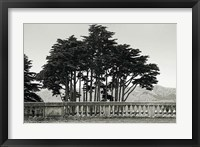 Framed Cypress Trees and Balusters