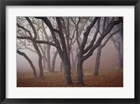 Framed Pilot Road Trees