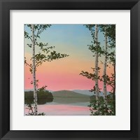 Cooper Sunset Birches Framed Print