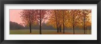 Framed Autumn Dawn, Maples