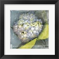 Framed Antique Bloom