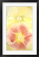 Framed Pink and Yellow Hollyhocks, 1952
