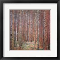 Framed Tannenwald I
