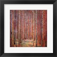 Tannenwald I Framed Print