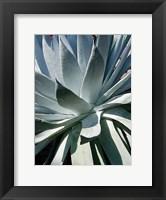 Framed Cactus 1