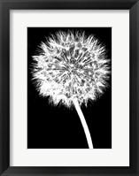 Framed Dandelion