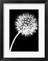 Framed Dandelion Tilt