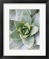 Framed Cactus 3
