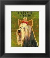 Yorkshire Terrier Framed Print