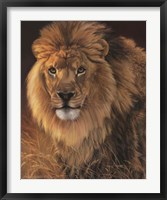 Framed Power and Presence- African Lion