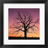 Framed Arboral Afterglow