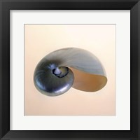 Framed Polished Nautilus