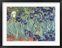 Irises in the Garden Framed Print