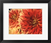 Hot Sun Framed Print