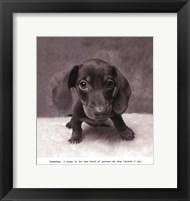 Framed Rupert