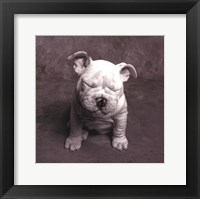 Baby Tears Framed Print