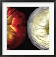 Ranunculus Left Framed Print