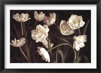 Bountiful Tulips Framed Print