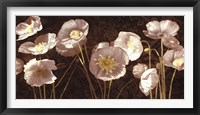 Framed Baroque Poppies