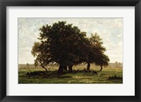 Framed Holm Oaks, Apremont