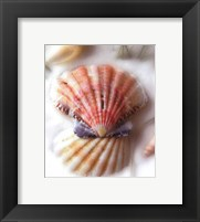 Sand and Shells II Framed Print