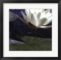 Framed Water Lillies II